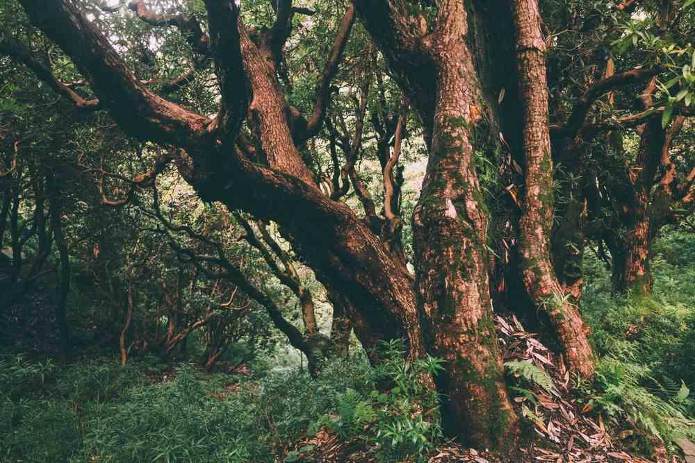 עצים קסומים הגדלים ליד דרמסלה
