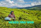 מונאר הודו - מדריך מקיף למטייל